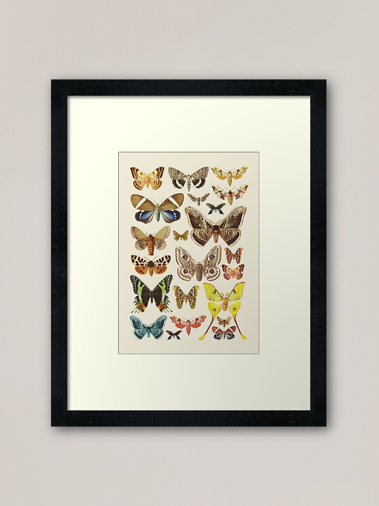 Alternate view of Collection Framed Art Print