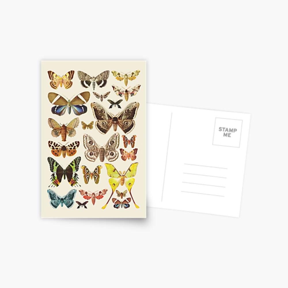 Collection Postcard