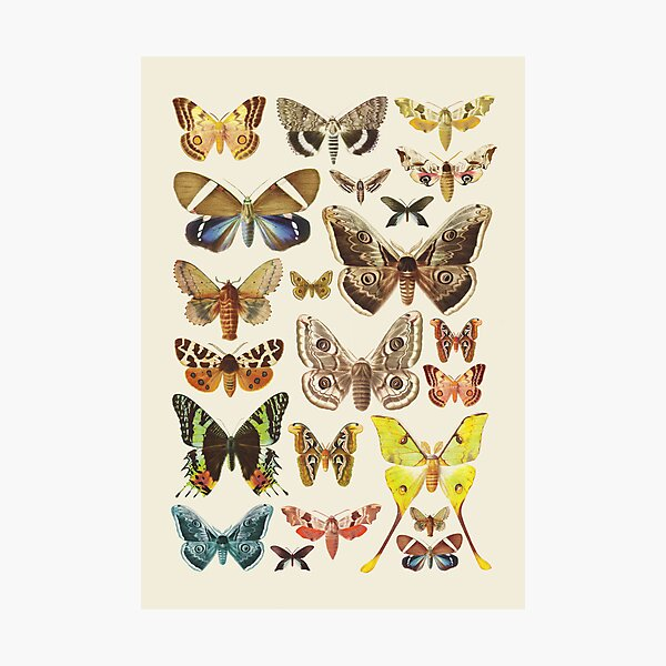 Collection Photographic Print