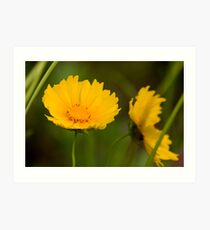 Lance-leaved Coreopsis Art Print