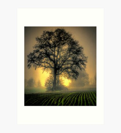 In The Early Light Art Print
