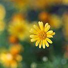 Spring Starburst by Terri~Lynn Bealle