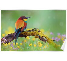 Low Poly Bird in nature Poster