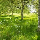 Shade of the Silver Birch by vivsworld