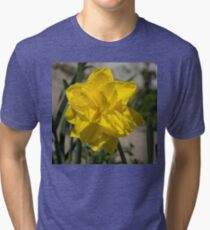 Sunny Yellow Spring - a Golden Double Daffodil Tri-blend T-Shirt