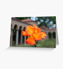 Franciscan Monastery rose garden, DC Greeting Card