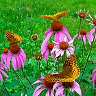Its Five O'clock Somewhere von NatureGreeting Cards ©ccwri