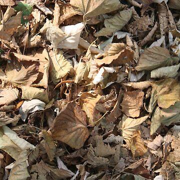 Autumn leaves by DiamondCrusade
