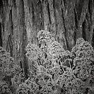 Hug a Tree by JOSEPHMAZZUCCO