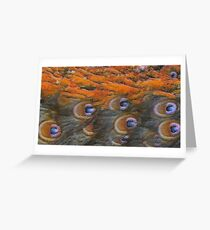 Painted Peacock Greeting Card
