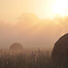 Foggy Morning on the Farm, As Is by Kim McClain Gregal