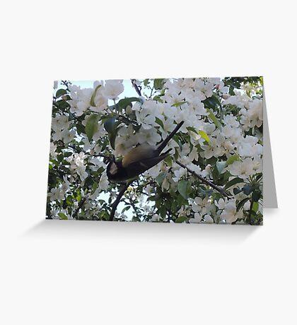 Nimble Musician (Bird in Blossom) Greeting Card
