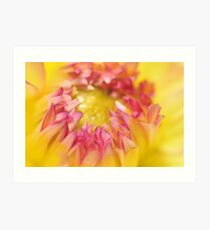 Pink and Yellow Dahlia, As Is Art Print
