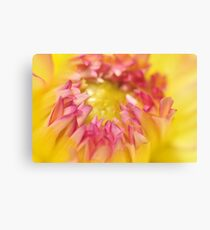 Pink and Yellow Dahlia, As Is Canvas Print