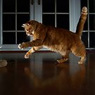 Playful cat by turniptowers