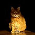 Unimpressed cat by turniptowers