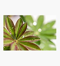 Lupin leaves Photographic Print
