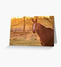Good Morning Whiskers! Greeting Card