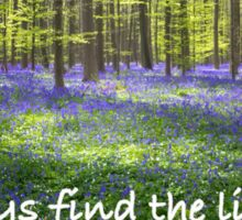 Find the Light - Nature Photography Sticker