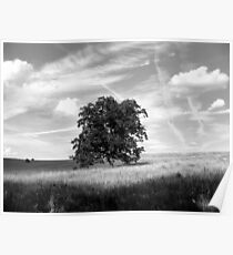 Tree of Life in B/W Poster