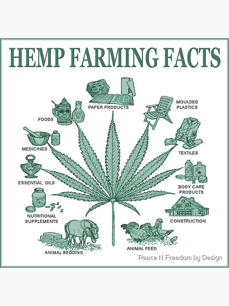 Hemp Farming  by peaceNfreedom