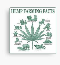 Hemp Farming  Canvas Print