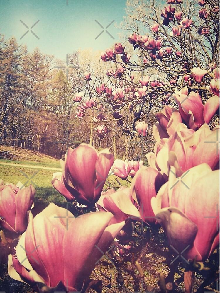 Spring Flowers by perkinsdesigns