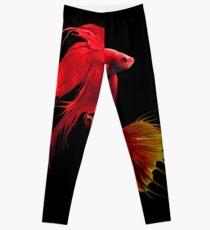 Betta Splendens ;Siamese fighting Fish.  Leggings