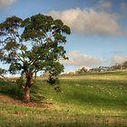 Anakie Tree von Danielle  Miner