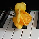Golden Rose on Piano Keyboard by BlueMoonRose