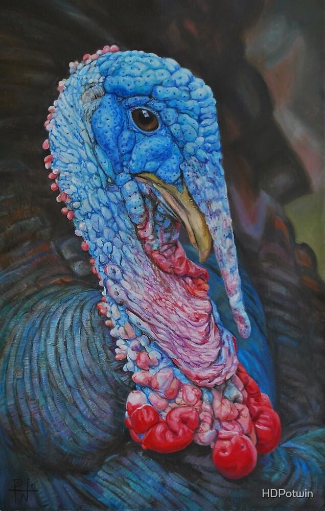 Turkey Boy by HDPotwin