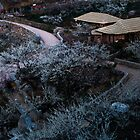 Plum flower village at night by aaronchoi