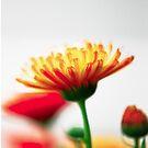 sunstruck flowers by Adam Carra