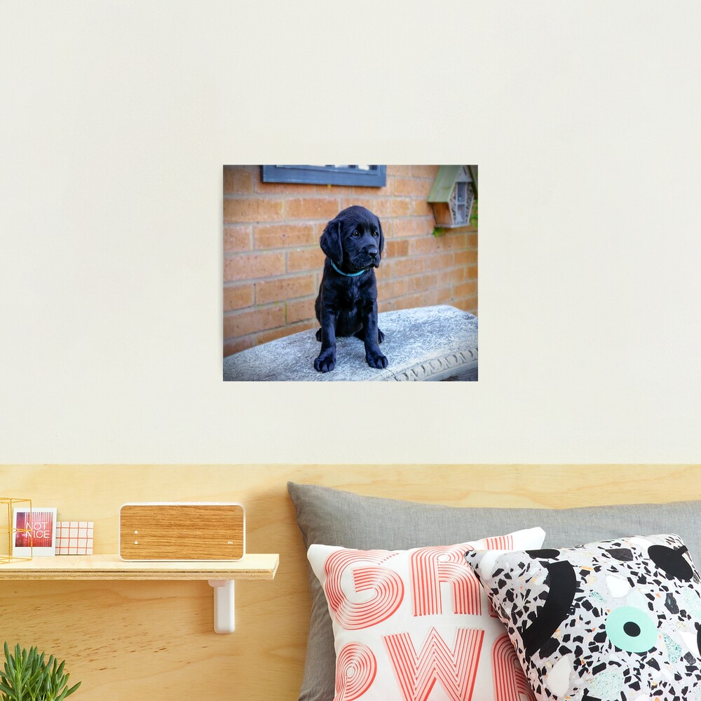 Cute puppy  Photographic Print