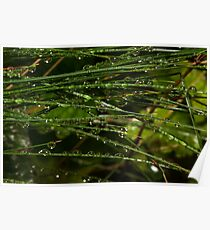 grass coverd with raindrops Poster
