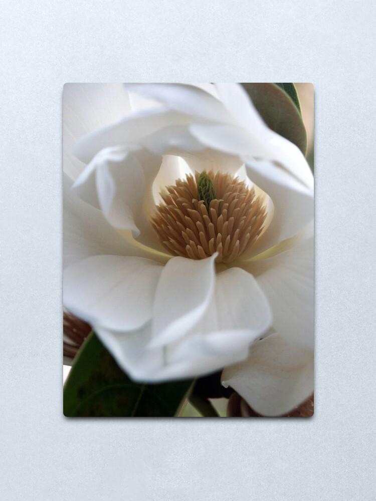 Alternate view of Evergreen Magnolia Metal Print