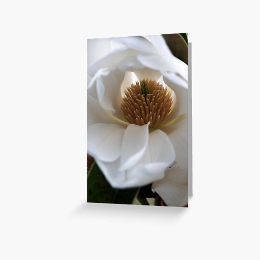 Evergreen Magnolia Greeting Card