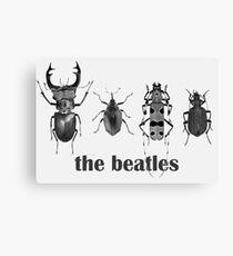 the beatles coleoptera Canvas Print