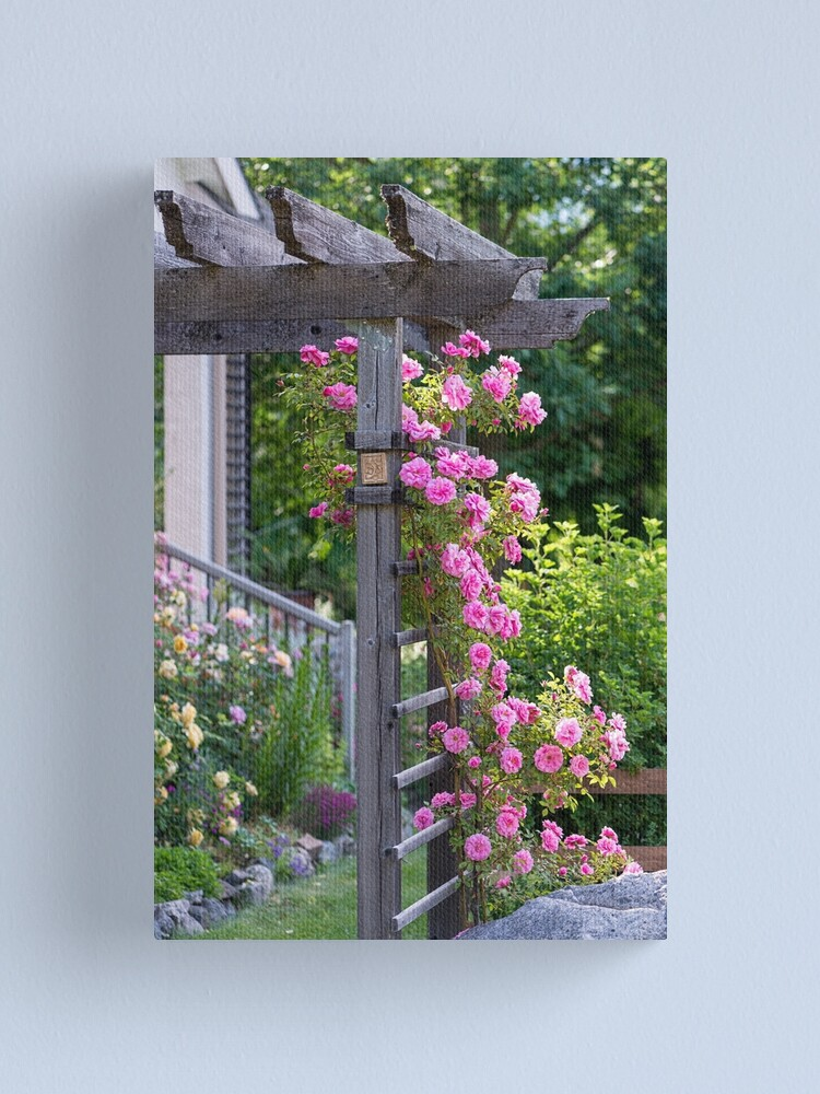 Alternate view of Climbing Roses Canvas Print