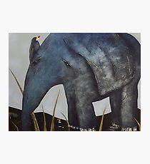 Bird on Baby Elephant Photographic Print
