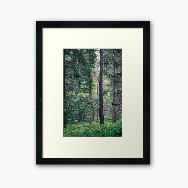 Forest Framed Art Print