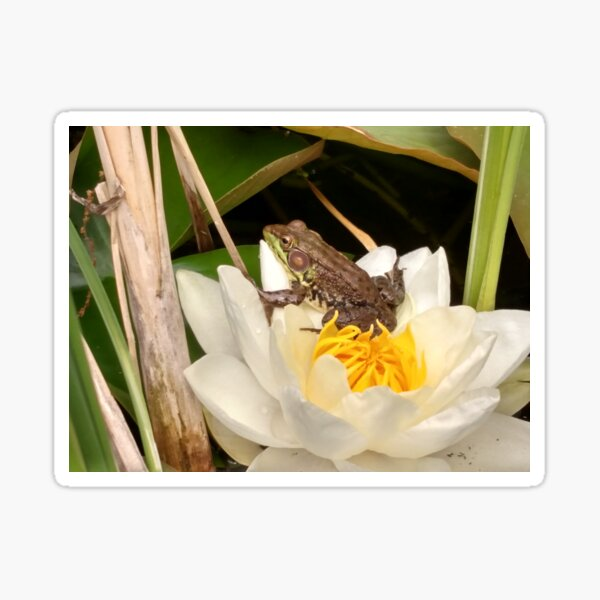 Frog on a Lily Sticker