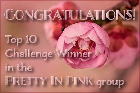 Proposed top 10 banner - Pretty in Pink by Celeste Mookherjee