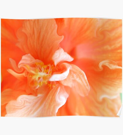 Orange Hibiscus Art Poster