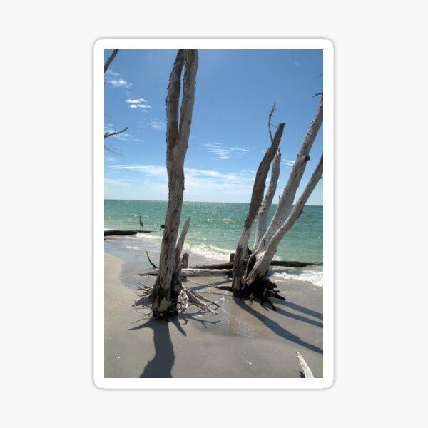 Stumps at Stump Pass Florida, USA Sticker