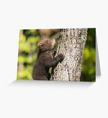 Black Bear cub climbing a tree Greeting Card
