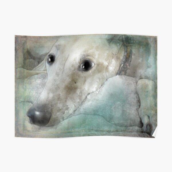 Those greyhound eyes! Poster