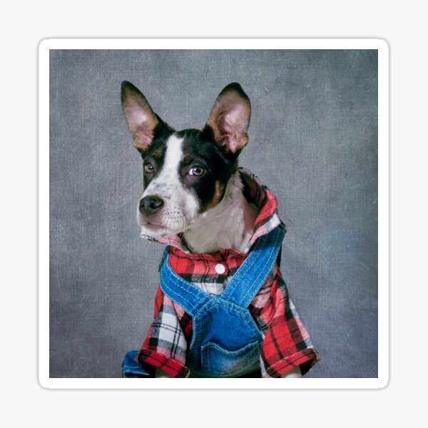 Shelter Pets Project - Snoop Dogg Sticker