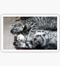 Tiredy Tabby Twins Sticker