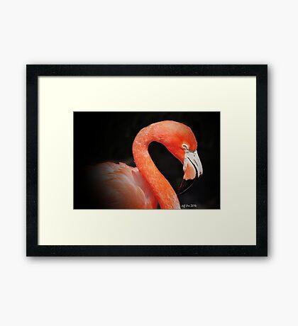 Pink Flamingo (Black Background) Framed Print
